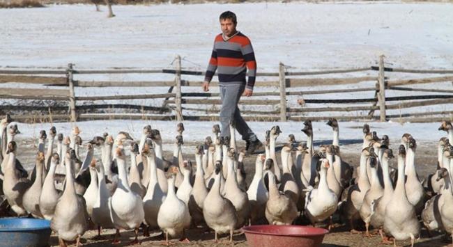 İyileşmek için döndüğü köyünde kaz çiftliği kurdu