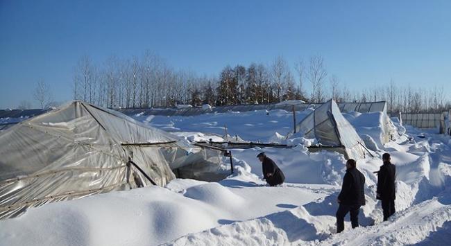 Olumsuz hava şartları seralardaki üretimi düşürdü