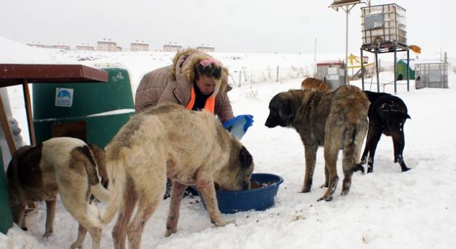 Sokak hayvanları için kar kış demeden 100 kilometre yol