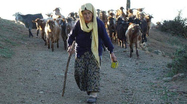 Koyun ve keçilerin peşinde 70 yıl