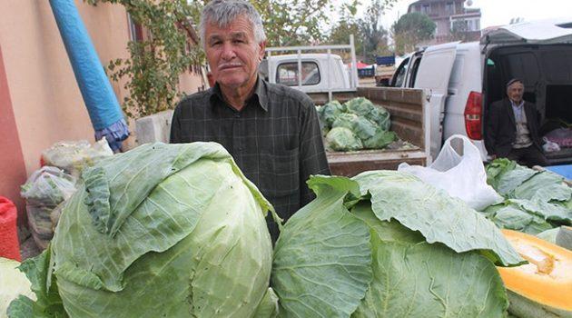 10 kiloluk lahanalara yoğun ilgi